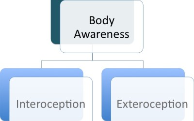 Teaching the Subtleties of Body Awareness & the Brain