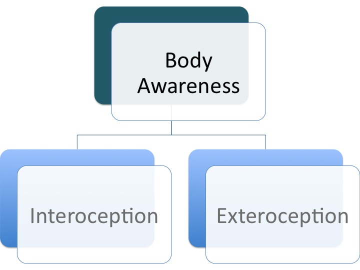 Teaching the Subtleties of Body Awareness & the Brain - Body